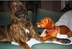 Do you know what your dog is saying ?