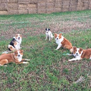 This image has an empty alt attribute; its file name is all-dogs-in-field.jpg